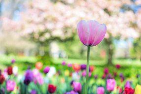 beautiful-bloom-blooming-414211.jpg
