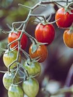 agriculture-blurred-background-close-up-965740-e1527871561164.jpg