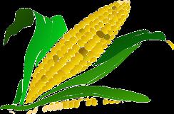 corn-296956_640